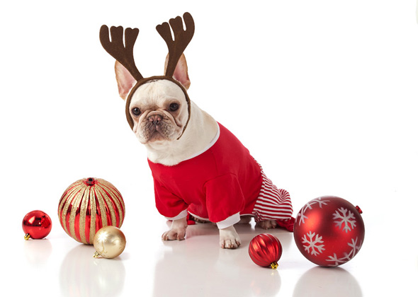 15 dog breeds wearing christmas outfits