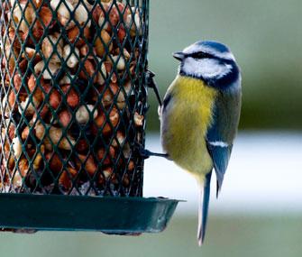 Bird at feeder during winter