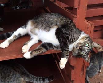 cat lounging in Lanai