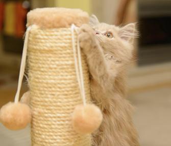 Kitten using scratching post