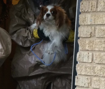 Bentley was removed from his owner's apartment by people in protective gear Monday.