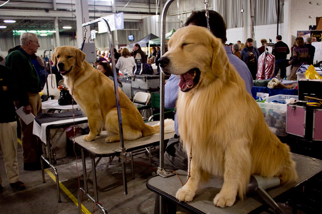 Thanksgiving Purina Dog Show Behind The Scenes
