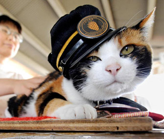 Tama, a cat who was a stationmaster at a train station in Japan, has died.