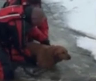 Firefighters came to the rescue of Bailey the Lab and his owner in an icy Illinois pond.
