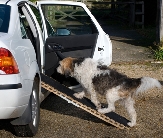 Dog using ramp into car