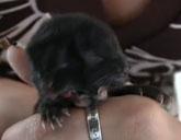 Two-faced kitten Harvey Dent