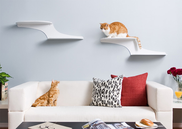 9 cat treats toys scratchers and perches to enrich your. Black Bedroom Furniture Sets. Home Design Ideas