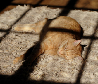 Cat Sunbathing