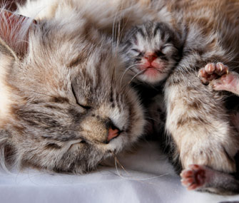Mother and newborn kitten