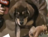 Selena Gomez's puppy Baylor