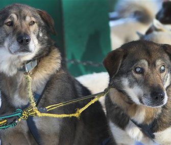 Poncho, left, helps guide his blind brother, Gonzo, right.