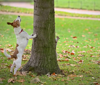 How To Train A Squirrel Dog With Pet Cats