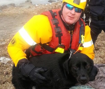 Fairfax County, Virginia, firefighters rescued 1 1/2 year old black Lab Dani from a freezing lake.