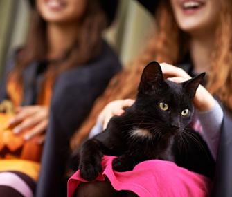 Black cat during Halloween