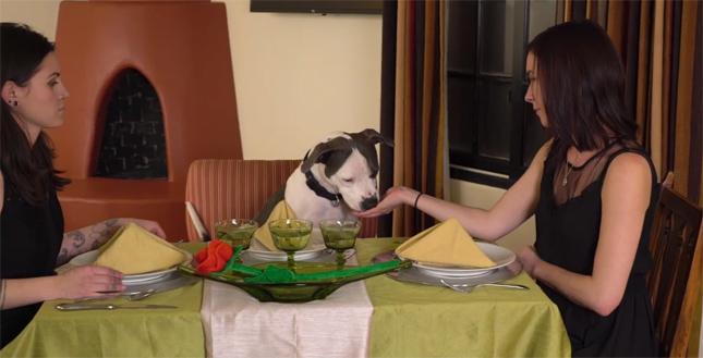 Women Vie for Dog Bachelor's Heart in Funny Animal Shelter