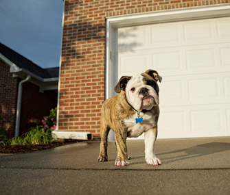 Dog in front of garage