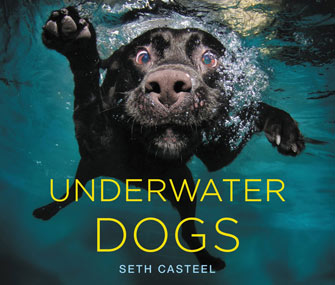 Underwater Dogs Cover
