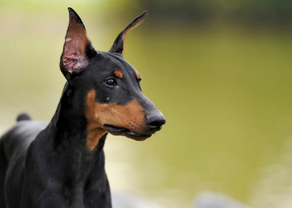 Most Popular Dog Names for Large Dog Breeds