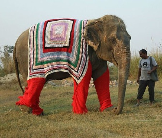 Elephants at a northern India sanctuary are staying warm with giant hand-knit sweaters.