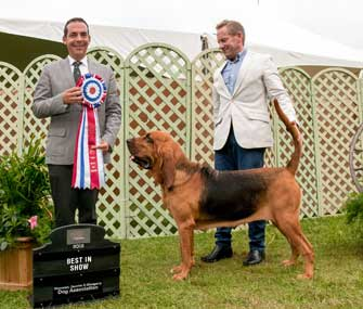 GCH CH Quiet Creek's Double or Nothing for Heather