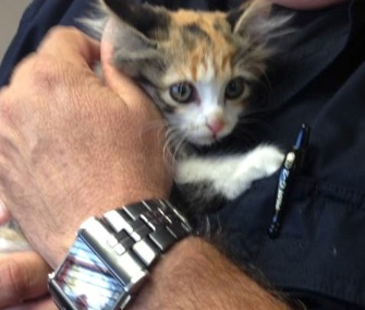 Freeway the kitten was rescued by Fort Worth police officers.