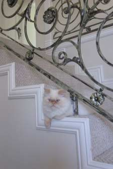 cat on stairs