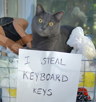 Cat From Shaming Tumblr