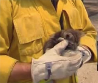 This little kitten was saved from the rubble of a deadly wildfire in central California.