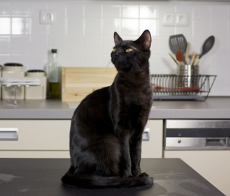 Q. My Cat Is Always Jumping Up On Tables And Kitchen Counters. When I Think  About Where Those Paws Have Been, I Know He Needs To Stay On The Ground.