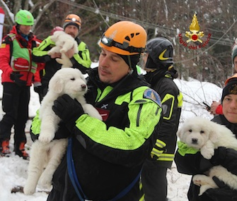 Three Sheepdog puppies were found five days after they were trapped inside a hotel by an avalanche.