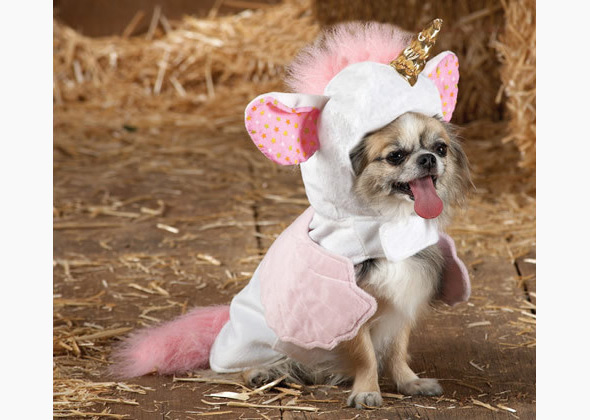 Product Review 12 Hilarious Pet Halloween Costumes For Dogs