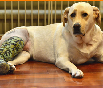 Dog wearing cast on leg
