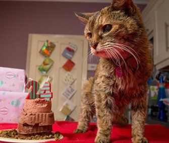 Poppy was been named the Oldest Cat Currently Living by Guinness World Records in May.