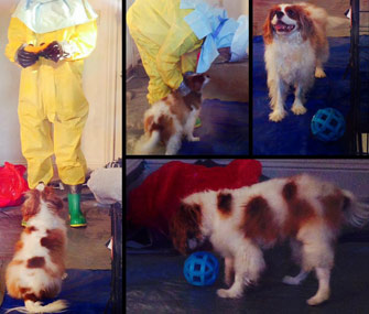 Bentley the dog tested for Ebola