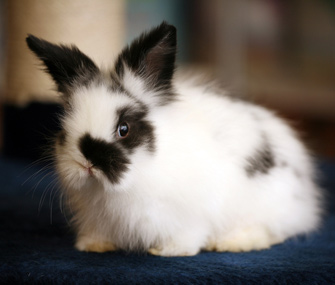 Cute young rabbit