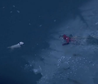 Dog's icy rescue