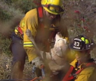 Firefighters saved Murphy, a 13-yera-old Lab, from a 100-foot cliff in California.