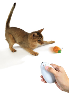 cat chasing a toy bug