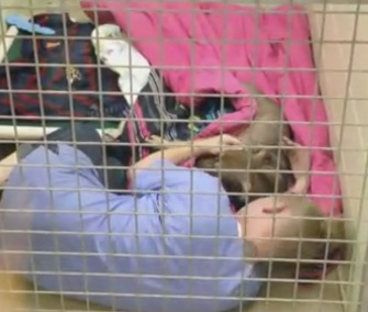Conway Area Humane Society staffer Chrissy Ireland cuddles with Prissy as she comes out of anesthesia.