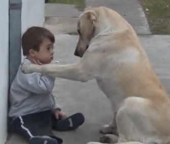 Himalaya works her magic to befriend little Hernan in a video that's gone viral.