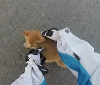 A motorcyclist wearing a GoPro camera saved a scared kitten from the middle of a busy intersection.