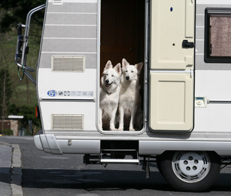 Dog in RV