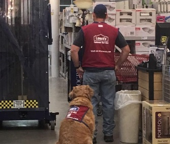 Charlotte wears her own red Lowe's vest as she works by her veteran owner's side.