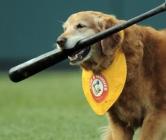 Chase the bat-dog helped the Trenton Thunder for 10 years before adoring crowds.