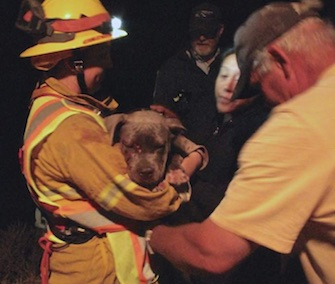 Firefighters saved Marshmallow from a dark hillside after she fell over a cliff.