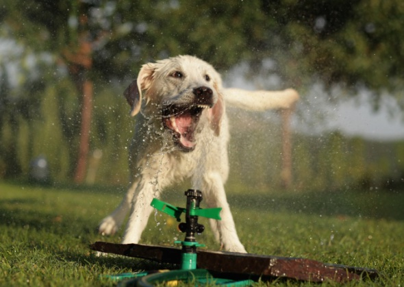 summer safety 6 tips to keep your dog cool