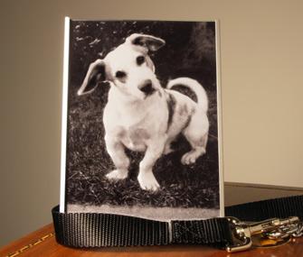 Dog photo memorial