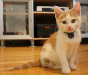 Ralphie the kitten has fully recovered after being found with his paws frozen to a metal fence.