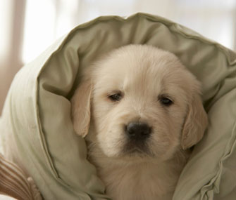 Believe it or not, a new study finds that looking at this cute puppy might help you focus.