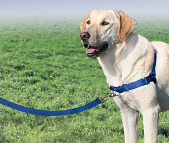 Tightening Harness: Easy Walk Harness by PetSafe